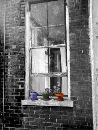 Ric's Window