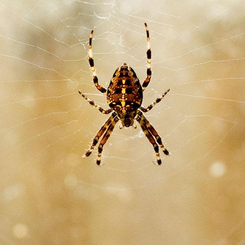 Garage Spider