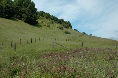 Fence along the Hillside